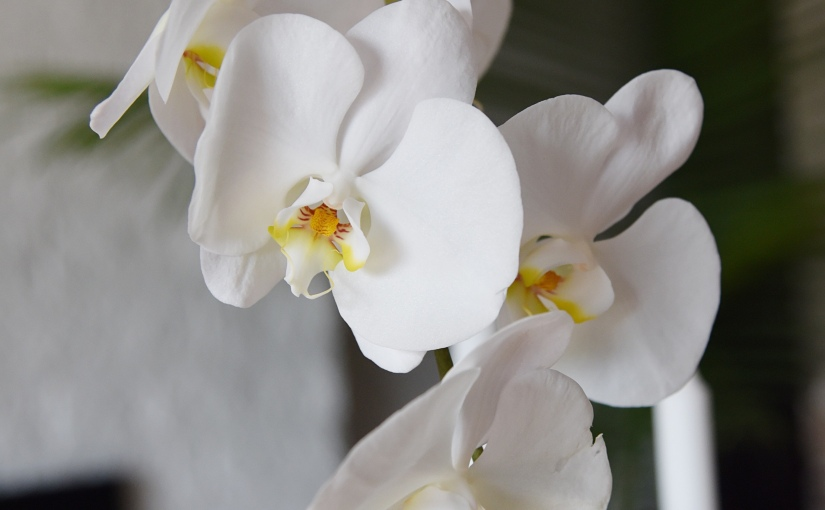 orchids and epiphytes
